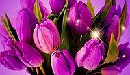 Язык цветов: как порадовать девушку на 8 марта