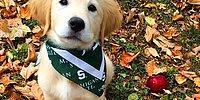 Вы не сможете сдержать улыбку, глядя на этого милого пса с брекетами