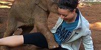 Маленькие слоны любят обниматься