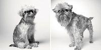 13 снимков, которые доказывают, что собаки тоже стареют