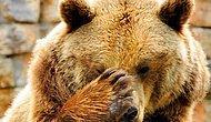 22 фото самых многострадальных среди животных медведей