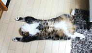 Tired Of Being A Human? How To Cat In 20 Easy Steps!