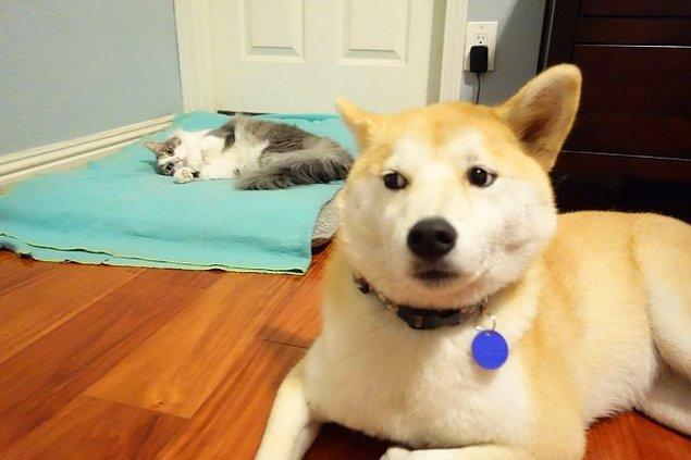 1. Ne kadar yumuşak ve sıcak bir yatak, ama seni hiç ilgilendirmez.