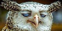 20 юмористических фактов о животных