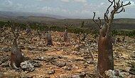 20 фотографий с самобытного острова Сокотра