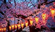 Sizi Sihirli Bir Dünyaya Götürecek Japonya Kiraz Ağaçlarının National Geographic'te Yayınlanmış 17 Fotoğrafı