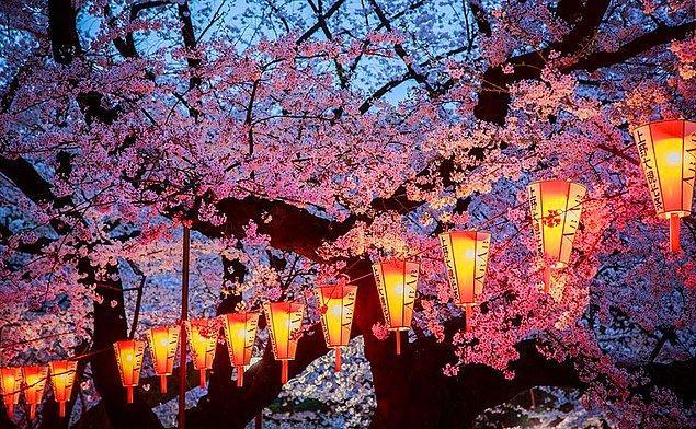 4. Akşam kiraz çiçekleri