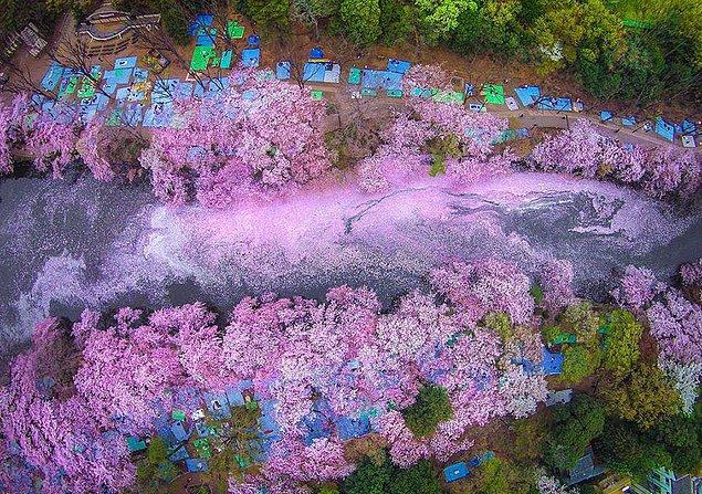 1. Sakura nehri