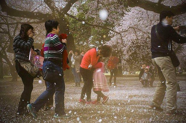 15. Kiraz çiçeği fırtınası