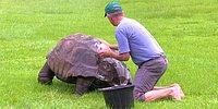 184-летняя черепаха Джонатан впервые в жизни принимает ванну