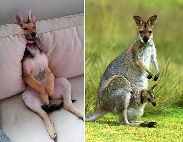 """4. """"Keşke kanguru olsaydım..."""""""