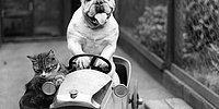 24 фото о дружбе кошек и собак испокон веков