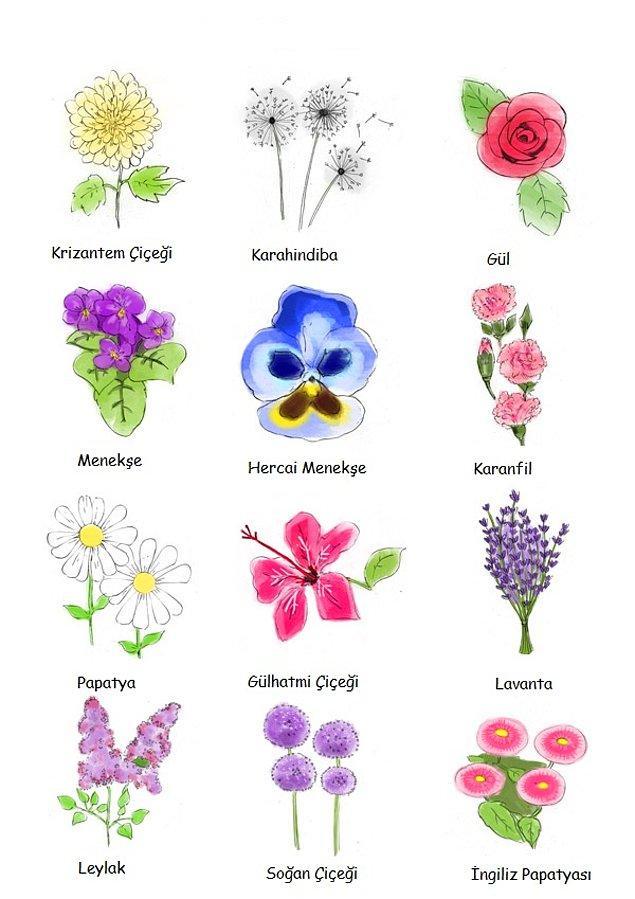 Bonus : Yenebilir Çiçekler Listesi