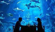 Парижский океанариум и его новый аттракицон: почувствуй себя героем фильма «Челюсти»