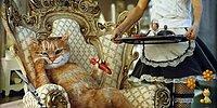 25 доказательств того, что коты и кошки правят этим миром