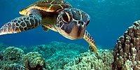 Какое морское животное живет внутри вас?