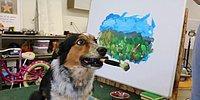Пёс-художник рисует пейзажи