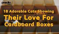 18 Adorable Cats Showing Their Love For Cardboard Boxes