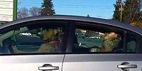 Нетерпеливые псы ждут хозяина в машине