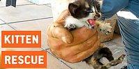 Спасатели помогли котятам выбраться из водосточной трубы
