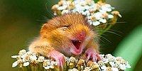 """25 фото """"улыбак"""" из животного мира: хорошее настроение обеспечено"""