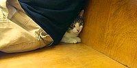 18 трусливых кошек, которые прячутся где угодно, только бы не идти к ветеринару