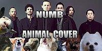 """Представим, что песню группы Linkin Park """"Numb"""" исполняют животные"""