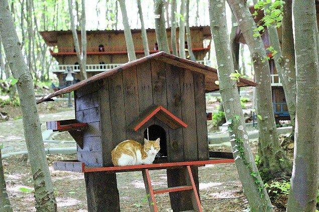 Yaklaşık 2 yıl süren çalışmalar sonucu kurulan tesiste 120 civarında kedi yaşıyor. Kasabaya Samsun dışındaki illerden kedi kabul edilmiyor.