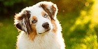 20 Things We Should Learn From Dogs