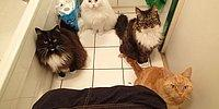 16 Abnormal Things Only Cat Owners Understand!