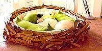 25 самых необычных и креативных кроватей: в объятиях Морфея