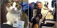 Авиакомпания нарушила свои собственные правила, чтобы спасти животных от пожара