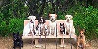 Убедить собак позировать всем вместе или 23 супер-фотки псов на выгуле