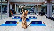 Кошки в спорте: 11 смешных фото от Симбы