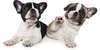 Лучший друг человека: 22 собаки передают привет на фото