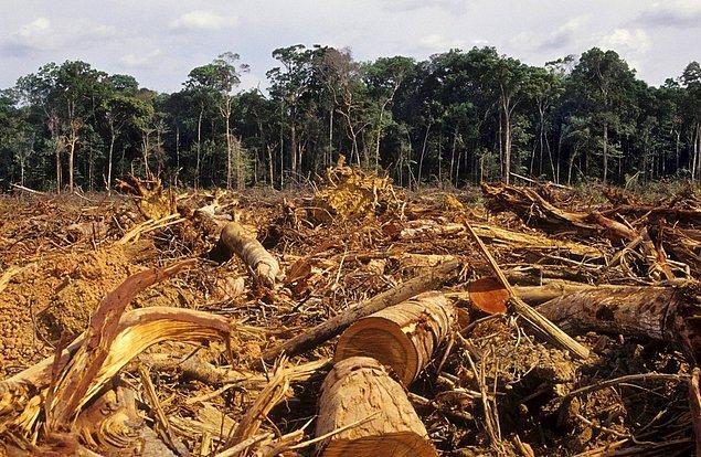 National Geographic'in raporuna göre, bugünkü orman yok olma hızı sabit kalırsa, 100 yıl içinde bütün yağmur ormanları ortadan kalkmış olacak.