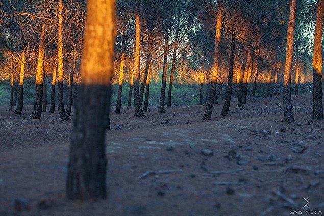 #2 Gün ışığı harika bir düzenle ağaçların üzerinde