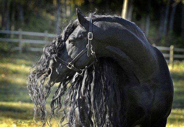 Tabii bu onun dünyanın en yakışıklı, en heybetli ve en görkemli atı olduğu gerçeğini değiştirmiyor.☺️