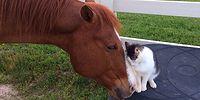 Невероятная дружба лошади Дакоты и кошки Снаппи