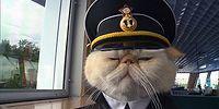 Иван Федорович Крузенштерн: кот и пароход