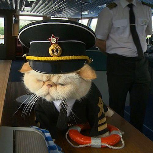 Кот в сомбреро