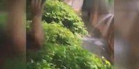В США ребенок упал в вольер с гориллой