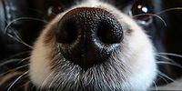 16 примеров, позволяющих нам постичь собачью логику