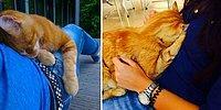 Рыжий кот-мурлыка помогает студентам справиться со стрессом