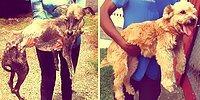 25 цепляющих за душу фото собак: до и после обретения дома
