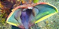 28 Highly Insane Sea Creatures For A Sleepless Night!