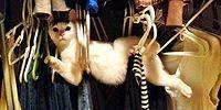 23 Hilarious Pictures Of Cats Hanging Out In The Most Awkward Places