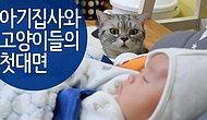 The Cute Reactions Of The Cats Who Have Seen A Baby For The First Time