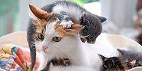 12 животных, познавших всю радость материнства