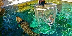 Искупаться в бассейне с крокодилами? Почему бы и нет!
